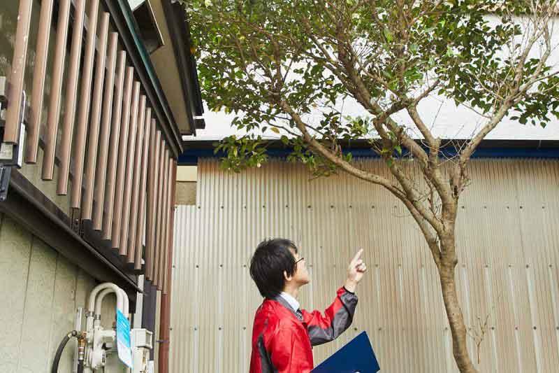 空き家の管理サービス 一戸建て 庭木の確認